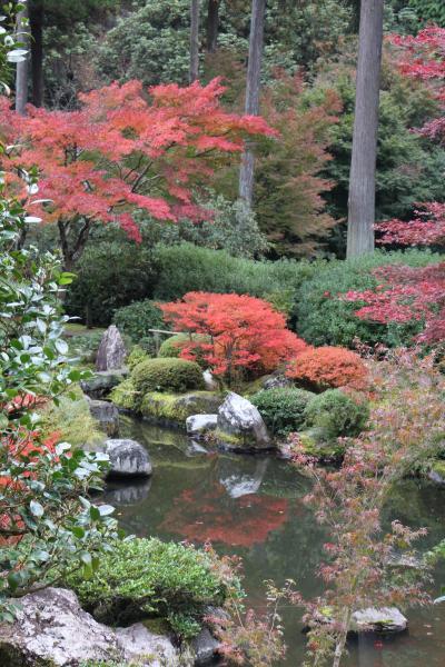 2013 秋の京都に美術と紅葉を求めて No2/2 三室戸寺