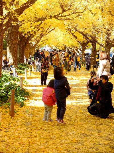 「 黄色い じゅうたん  神宮外苑 いちょう 並木 ~迎賓館  さんぽ 」 2013