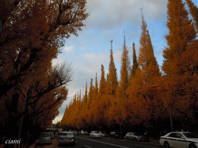 黄色い青山
