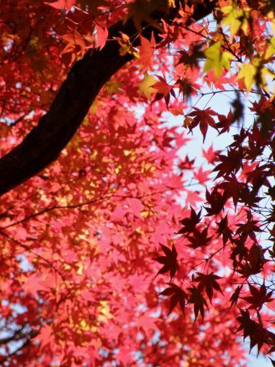 龍野公園・東山公園紅葉めぐり