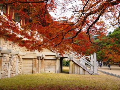 2013 晩秋の釜山より 落葉の仏国寺