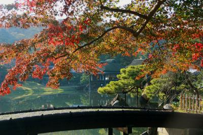 見頃を迎えた紅葉を求めて鶏足寺と玄宮園へ