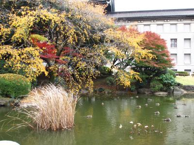 2013年 上野の国立博物館にある庭園で紅葉を楽しみました。
