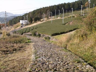 東海道を歩く(大井川-見附宿)