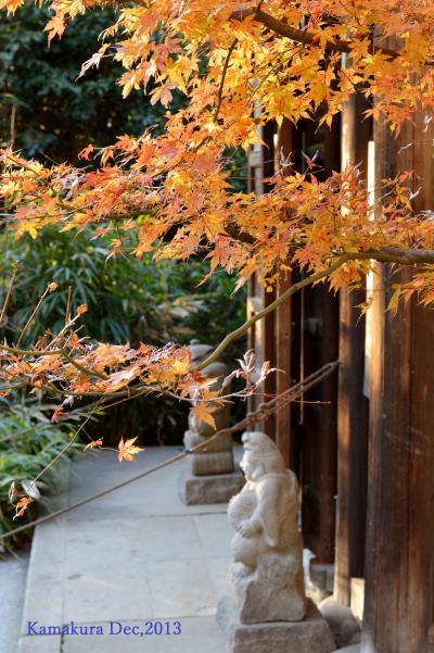 【神奈川県(鎌倉)】 初冬の夕暮れ散歩「鎌倉の奥座敷、紅葉ヶ谷の瑞泉寺へ」