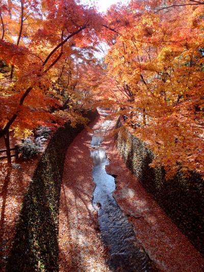 晩秋の京都紅葉めぐり&神戸ルミナリエ