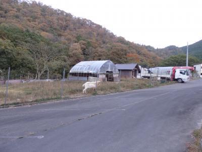 日本の旅 関西を歩く 京都府南丹市(なんたんし)るり渓(るりけい)やぎ農園、るり渓温泉(るりけいおんせん)周辺