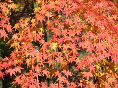 龍野公園紅葉