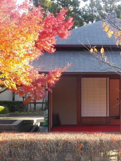 松山城二之丸史跡庭園で紅葉している庭園を歩きました