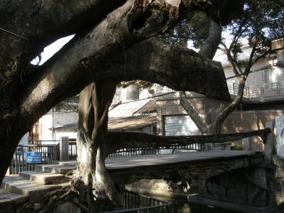 樹生橋はその名のとおり生きていた