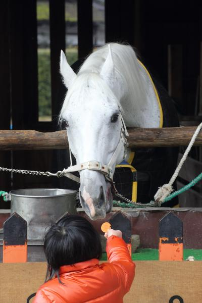 京都を歩く(184) 2014年は午年 「馬」にゆかりのある神社へ初詣