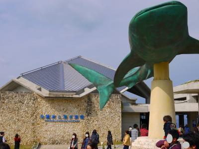 沖縄の旅 美ら海水族館・首里城 ☆ 2013~2014