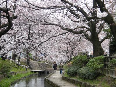 桜咲く、神奈川県川崎市多摩区二ヶ領用水(にかりょうようすい)