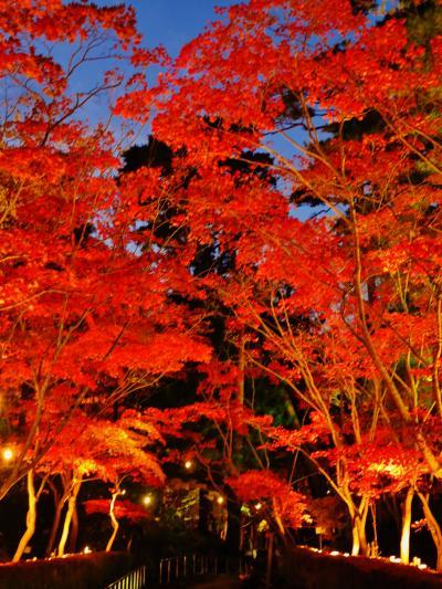 柏崎 松雲山荘 紅葉ライトアップのとき ☆日本庭園輝き増して