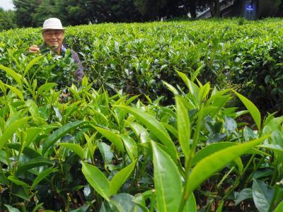 ヌワラエリヤはお茶畑の中に  INスリランカ 9日目