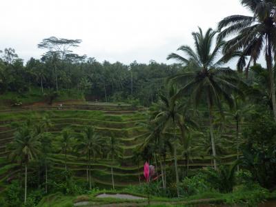 ティモール島最高峰・ラメラウ山登山記 インドネシア、東ティモール(バリ島)編 1 2014