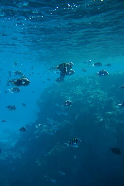 エジプト ~シャルム・エル・シェイク Hilton Shark Bay Resortの休日