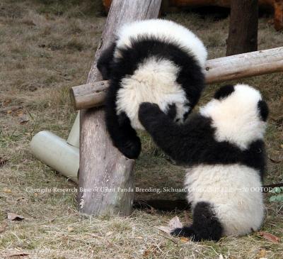 成都・雅安・香港・マカオのパンダさんを訪ねて(全体)
