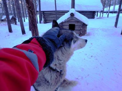 英語のできない夫婦が行く。フィンランド旅行!-犬ぞり・モイモイ号リベンジ編-