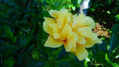 避寒旅行(75)・・・沖縄本島 東南植物楽園その3 植物園