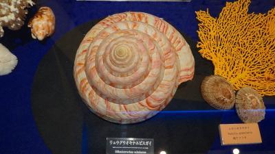 避寒旅行(110)・・・沖縄本島 古宇利オーシャンタワー 貝類展示館 上巻