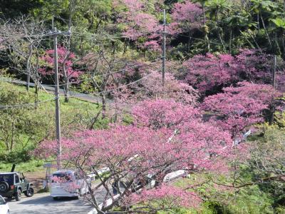 ちょっと遅めの冬休み。沖縄は、春でした。