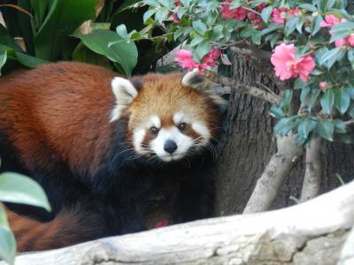 レサパンコミュオフ会@神戸市立王子動物園
