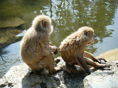 温泉はお猿さんも好き?