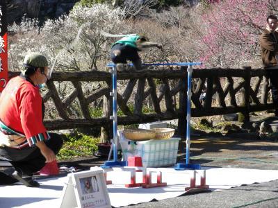 梅香る熱海梅園と熱海桜
