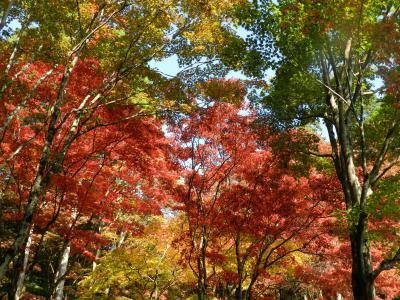 『鶏足寺』の紅葉は評判通りに素晴らしかった!◆2013年・湖北の紅葉めぐり≪その4≫