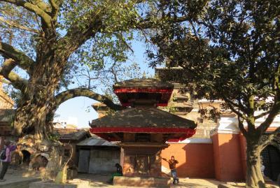 2014新春、ネパール旅行記(37)1月26日(7):カトマンズ、ダルバール広場、ハヌマーン・ドカ