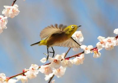 待ち遠しい春 (2010月3月 春の頃.......)