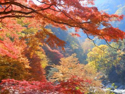 サントリー登美の丘ワイナリーと紅葉の昇仙峡旅行
