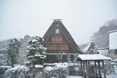 雪でも元気だ。。。日本民家園へ雪景色を見に行ってきました。