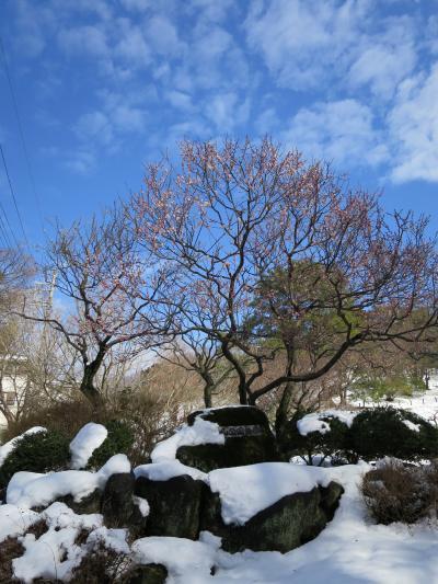雪景色の横浜・大倉山梅林を見に行く