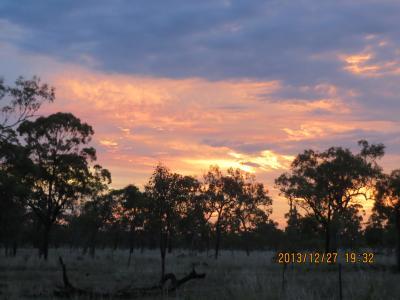 オーストラリア北部の野生動物をたずねて(6) Undara Volcanic National Park