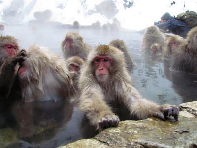 湯田中温泉と雪猿の旅