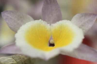 都会の真中の楽園・世界らん展2014(3)マクロでらんの美しい造形に迫る:日本大賞その他の受賞花や花の暖簾のようにぎっしり咲く見事ならんたち
