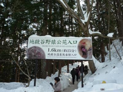 大雪の為に休園でした地獄谷野猿公苑が、再開しました♪