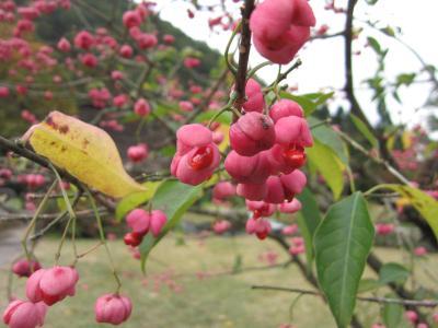 春夏秋冬大好き!秋の白川郷に行きたくて・・