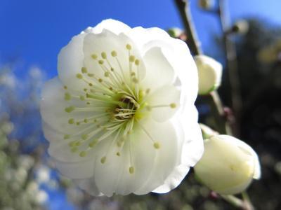 一時帰国2★春の訪れを感じたHAMAMATSU