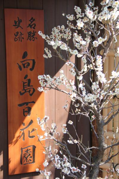 梅を観に・向島百花園