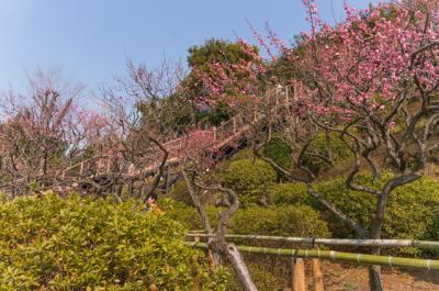 梅の名所めぐり その3(東京23区内)