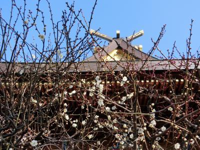 湯島天神の梅2014を様子見と、ソウルを羨むへべれけオフ会