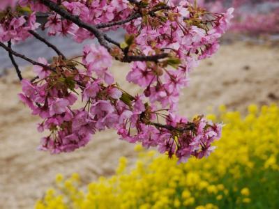河津桜の季節に沼津~河津ブラブラドライブ