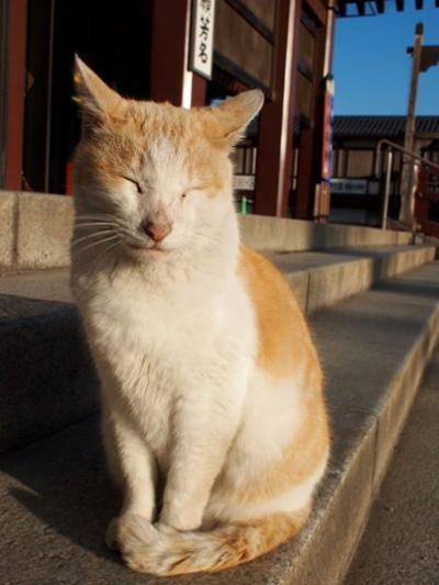 日曜、横浜中華街で焼きそば・猫・と川崎大師にやっとお参り。