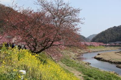 伊豆下賀茂温泉と河津の河津桜を見に行きました
