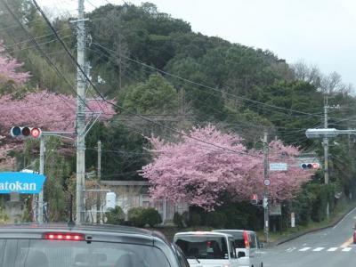 第16回みなみの桜と菜の花まつり 2014.03.03 =1.往路=