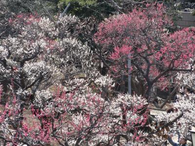 大田区池上梅園と池上本門寺 2014年3月