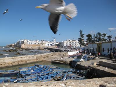 モロッコぐる~り周遊13日間(12) ◇◆エッサウィラ カモメ舞う美しき港町◆◇